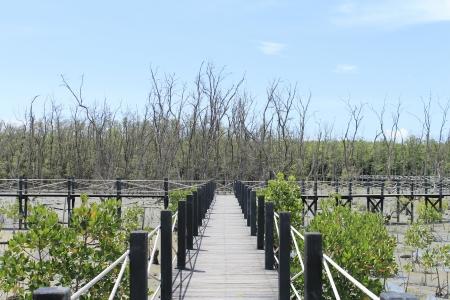 Mangrove tree,Thailand