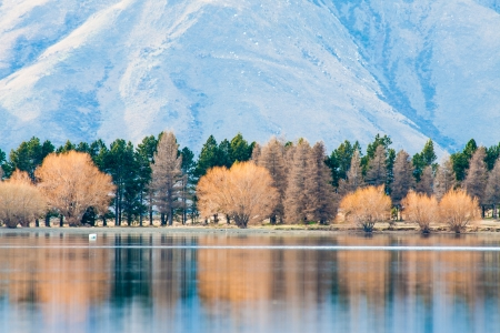 Autumn tree reflection with lake, Lake Clearwater, New Zealand photo