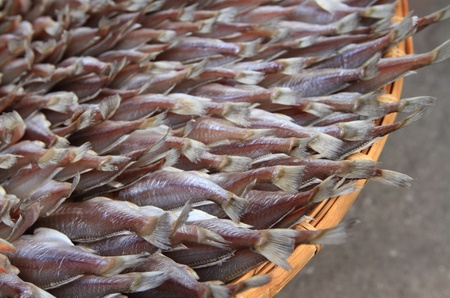 Dried fishs in seafood market,Thailand photo