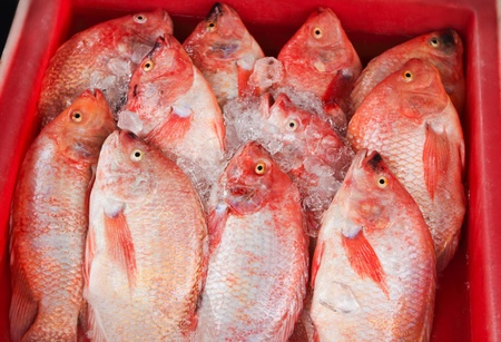 Fresh snapper in seafood market,Thailand