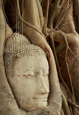 Head of a buddha in the tree at ayutthaya, Thailand photo