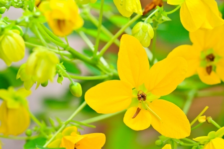 Yellow flower background, bright colors