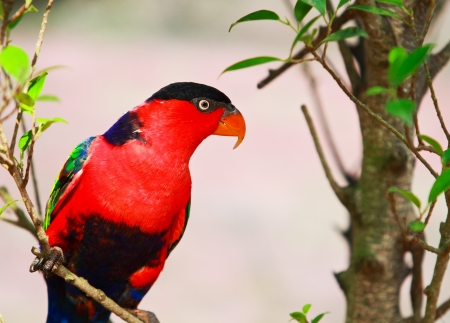 Macaw on branch Stock Photo - 15831106