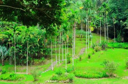 palm garden: Walkway in palm garden
