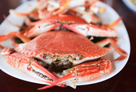 Hot steamed blue crabs photo