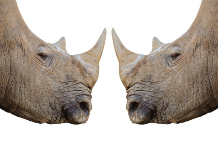thickness: Rhinos isolated on white background Stock Photo