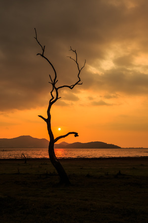 silhouetted: Silhouetted of a dead tree with sunset