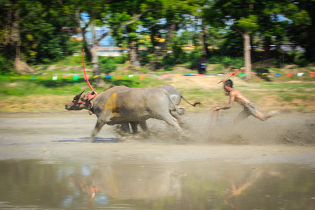 Motion blurred of buffalo competition