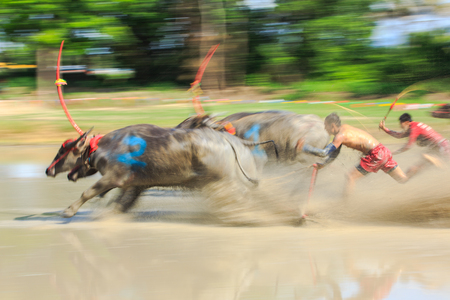 dirt track: Motion blurred of buffalo competition in dirt track Stock Photo