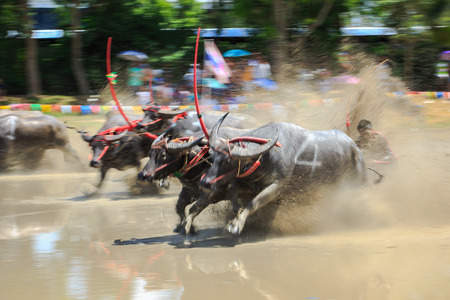 Motion blurred of buffalo competition in dirt track Stock Photo