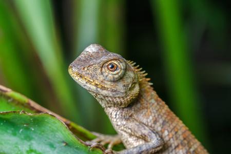 lizard in field: Primer plano de un lagarto en el árbol