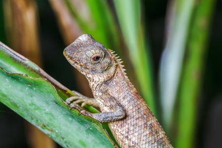 Closeup of a lizard on tree