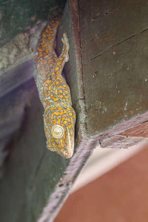 Gecko lizard in abandoned house