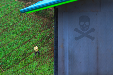 Farmer feeding a pesticides to control insects in cabbage field Stock Photo