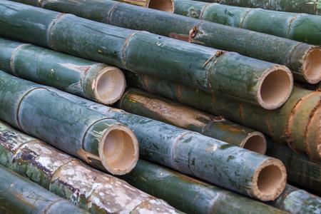Bamboo Pile Closeup
