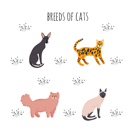 Vector illustration. Set icons cartoon style of cat breeds. Cute characters for different design.
