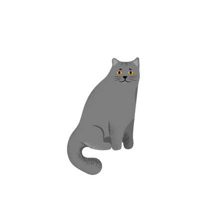 Vector illustration. Cute character cartoon style of cat. Icon of british shorthair breed for different design.