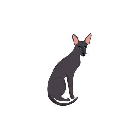 Vector illustration. Cute character cartoon style of cat. Icon of oriental shorthair breed for different design.