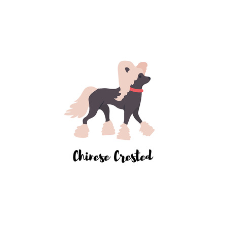 Icon of chinese crested dog. Vector.