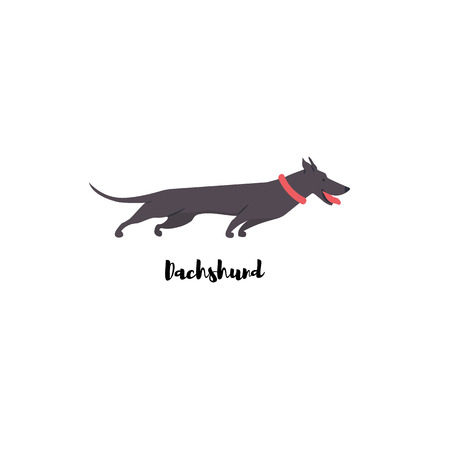 Icon of dachshund. Cute family dog. Vector illustration.