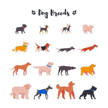 Icons of dogs: French bulldog, toy terrier, spitz, corgi, basset hound, dachshund, rhodesian ridgeback, weimaraner, retriever, spaniel, komondor, doberman, poodle, mittelschnauzer. Vector. Stock Vector - 123476741