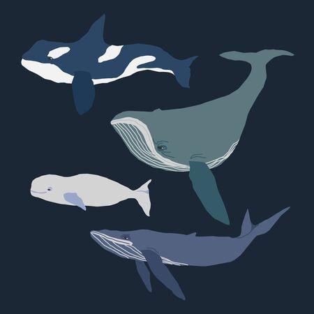 Illustrazione disegnata a mano piatta di raccolta di balene su sfondo blu scuro. Per i libri, giochi per bambini, adesivi, cartoline di elementi di design.