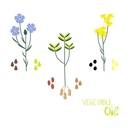 A set of vegetable oils of different types. Flat vector illustration of linenseed, colza, peanut oil.