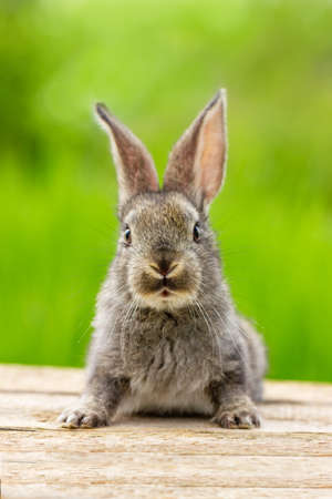 Beautiful funny grey rabbit on a natural green background
