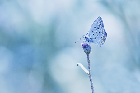beuty: Butterfly on the blue backgroud