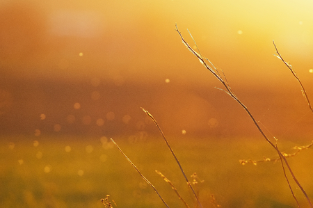 golden dusk: orange background