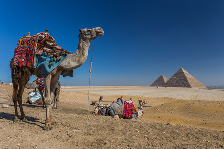 pyramid of Giza in Egypt Stok Fotoğraf - 38844782