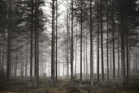 wintery day: Trees in the forest in the winter.