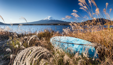 japanese maples: Fuji in Japan