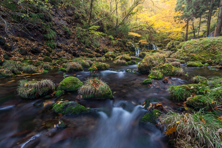 beautiful waterfall in forest, autumn landscape Stok Fotoğraf