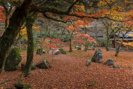 Red leaf in Fukuoka Japan Stok Fotoğraf