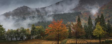 Autumn in Niigata