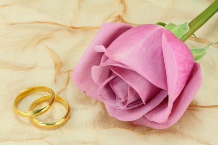 rose ring: A pair of wedding rings and a pink rose Stock Photo