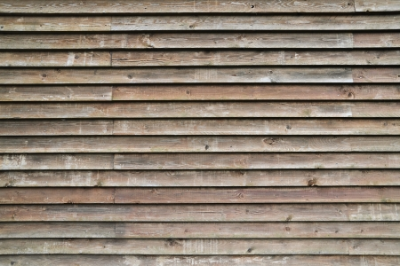 walnut burl: Grunge planks of wooden wall Stock Photo