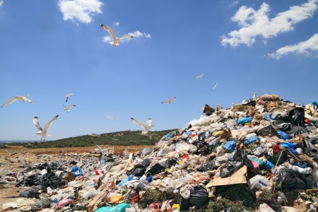 Herde von Möwen über Deponie. Urheberrechtlich geschütztes Material gründlich entfernt