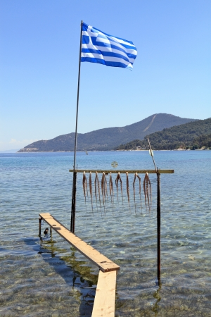 촉수: Octopus tentacle drying under the sun in Greece