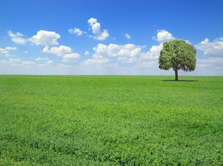 Field with grass and lonely tree in springtime photo