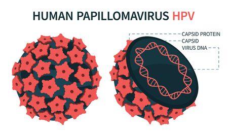 Structure interne et externe du papillomavirus humain HPV. Une représentation schématique agrandie. Illustration vectorielle.