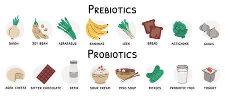 Flat vector illustration of probiotic and prebiotic sources. Products with these bacteria are nutrient rich food such as soy beans, garlic, artichoke, bread, cheese, yogurt, dark chocolate, kefir Ilustração