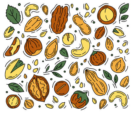 Nuts and Seeds set of vector icons in the Doodle style. Walnuts, macadamia, hazelnuts and peanuts isolated on a white background. Ilustração