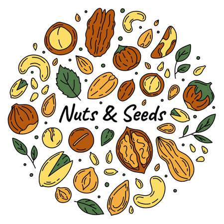 Nuts and Seeds set of vector icons in the Doodle style. Walnuts, macadamia, hazelnuts and peanuts on a white background.