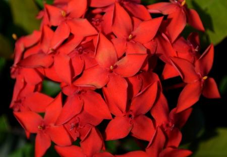 Flor vermelha Foto de archivo - 83024360
