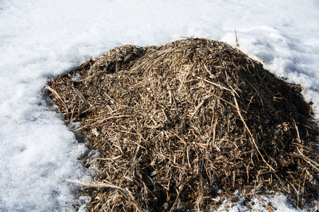 Pile of dry debris, grass in the spring against a background of snow.