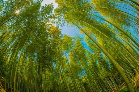Bamboo image
