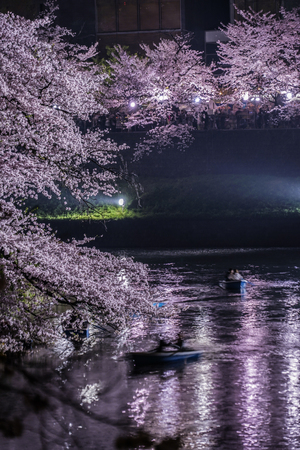 Of Chidorigafuchi going to see cherry blossoms at night