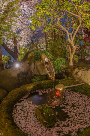 Sakura and Kokeraotoshi 写真素材